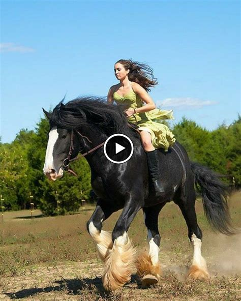 horse horses names planet breeds