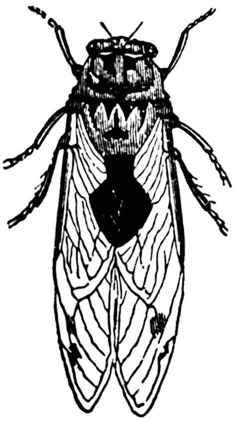 cicada clipart