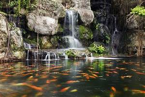 Bassin à Poisson. bassin de jardin poisson rouge carpe ko youtube ...