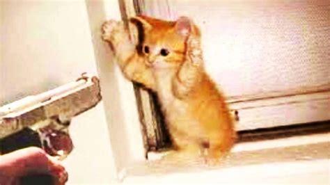 imagenes de gatos  perros tiernos  graciosos animales hoy