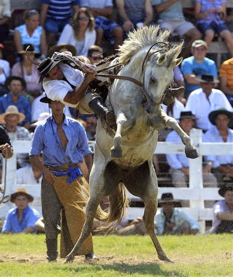 horses horse riding dangerous riders fierce throw humans kick vs without untamed kicking rider these horseback legs sport isn won