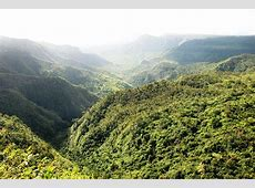 Kostenloses Foto Mauritius, Urwald, Insel, Wald