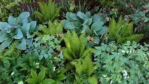 Pflanzen Für Schattengarten : schatten garten mit herzblumen und farne schattenpflanzen pinterest farne schatten und ~ Sanjose-hotels-ca.com Haus und Dekorationen