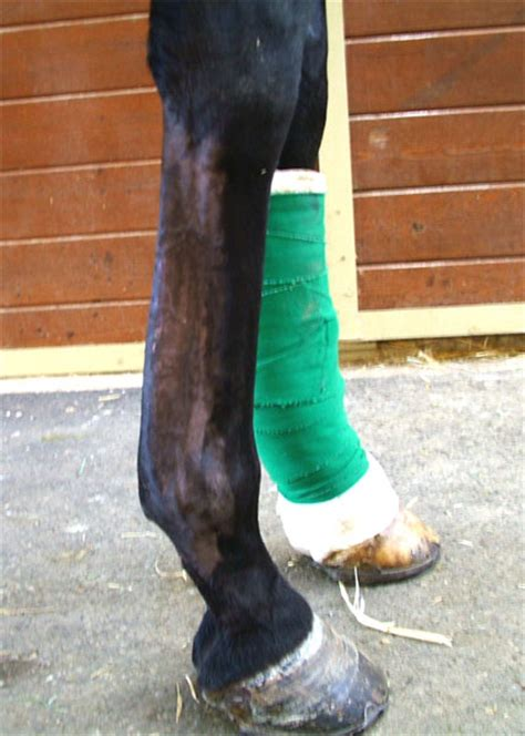 game ready equine bowed tendon