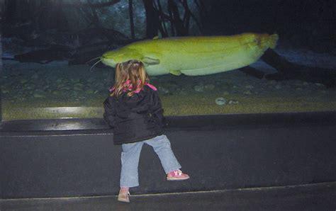 matinee a l aquarium de touraine amboise 37