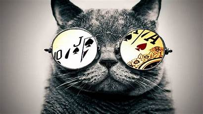 Cat Glasses Aces Wallpapers Cats Desktop Nyan