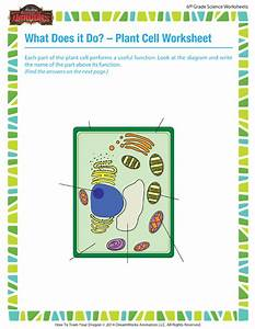 What Does It A Do  Plant Cell Worksheet  U2013 6th Grade