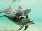 Caribbean sea animals |Clickandseeworld is all about Funny ...