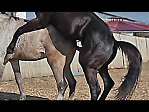 Horse Breeding Youtube | www.pixshark.com - Images ...