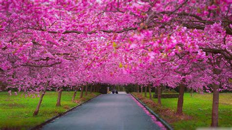 Botanical Gardens Washington Dc by Spring Scenery Wallpaper Android Apps On Google Play