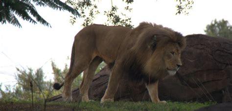 highlights   rides  disney worlds animal kingdom