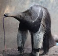 100-Plus Things: Brave the Buffalo Zoo in winter – The ...