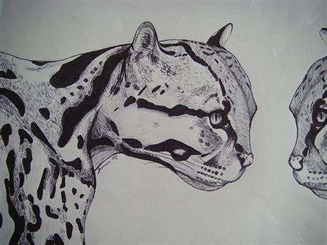 wild cats drawing  jenna