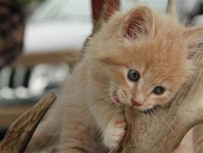 Kittens Kitten Cat Cats Chewing Chats Cutest