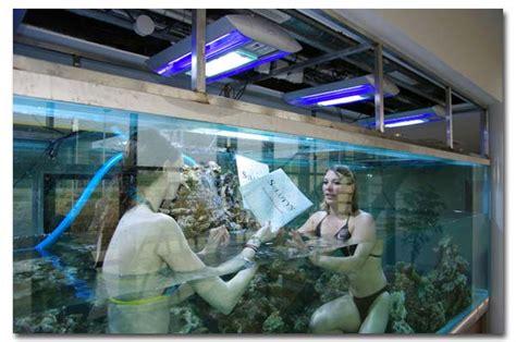 aquarium dans le nord l aquarium geant du groupe solutys abri sous roche
