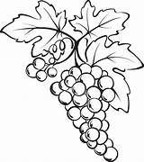 Grapes Grape Coloring Bunch Drawing Vine Printable Pages Drawings Clipart Fruits Fruit Sketch Clip Vegetables Wine Printables Sheets Pencil sketch template