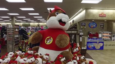 buc ees beaver mascot wins  lawsuit  branding