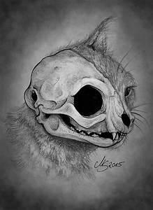 Cat U0026 39 S Skull By Sarembaart On Deviantart