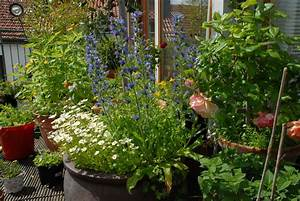 Welche Blumen Für Bienen : bienenfreundliche pflanzen fr den kleinen garten oder den balkon ~ Eleganceandgraceweddings.com Haus und Dekorationen