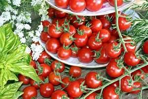 Pferdemist Für Tomaten : tomaten tipps f r eine reiche ernte mein sch ner garten ~ Watch28wear.com Haus und Dekorationen