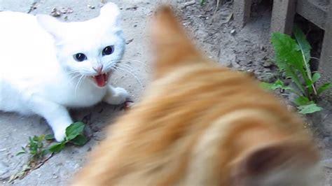 discipline  cat  stop   biting pet