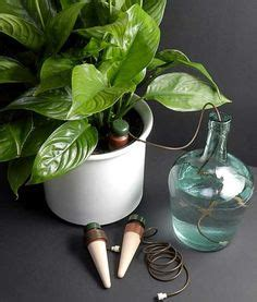 Zimmerpflanzen Im Urlaub Bewässern by Zimmerpflanzen Automatisch Bew 228 Ssern