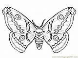 Coloring Moth Pages Getdrawings sketch template