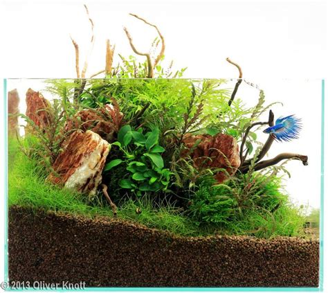 setup aquascape 11 best images about betta fish tank setup ideas on