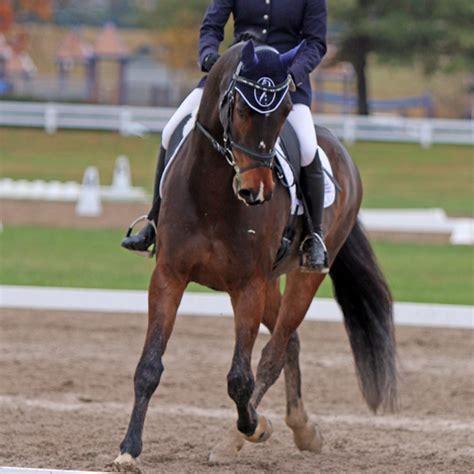 athlete biggest earth horses
