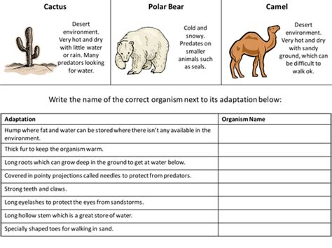 adaptation worksheet revision aid by hannahradford teaching resources tes
