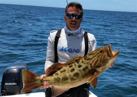 grouper gulf fish mexico mexican california length caught baja catch crabs weight