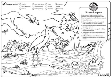 alouette river management society kids page alouette
