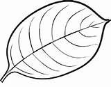Leaf Coloring Leaves Mango Printable Maple Drawing Template Syrup Line Oak Sheet Tree Clipart Clip Getdrawings Pumpkin Om Clipartmag Getcolorings sketch template