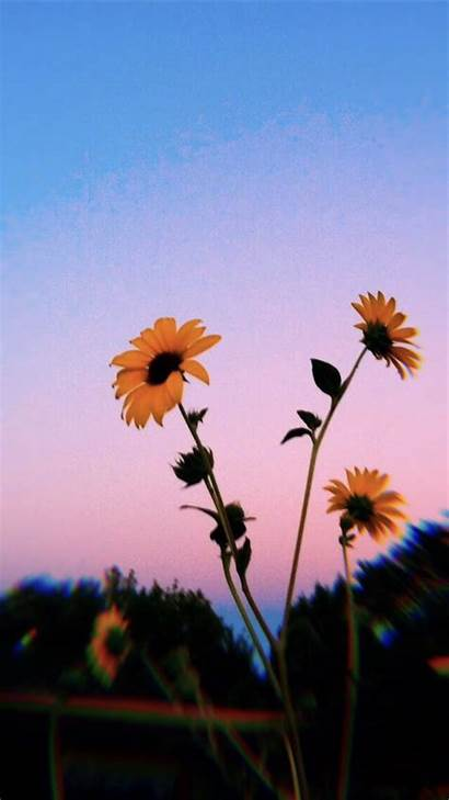Aesthetic Wallpapers Clouds Cloud Backgrounds Sunflower Iphone