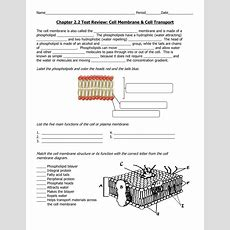 Worksheet Cell Membrane Coloring Worksheet Grass Fedjp Worksheet Study Site