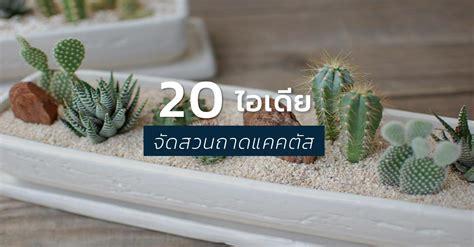 20 ไอเดีย สุดเจ๋ง! การจัดสวนถาดจากต้นแคคตัส (กระบองเพชร)