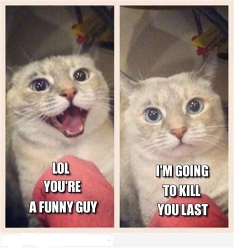 Cats Meme - 30 funny animal captions part 7 30 pics amazing creatures