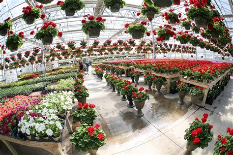 nearest garden nursery nearest nursery for plants thenurseries