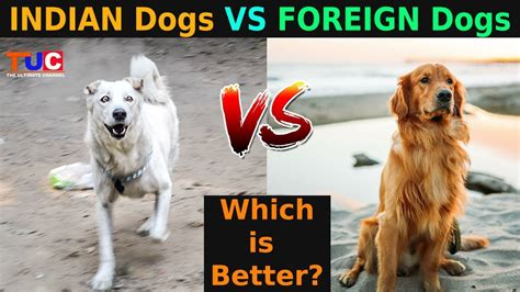 dog breeds in india with price and pictures
