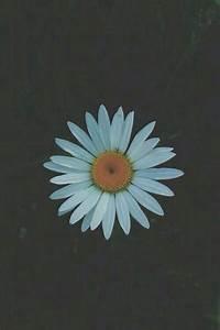 lock screen flowers | Tumblr