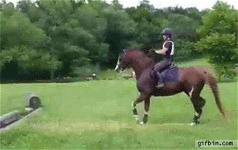 hesitant horse jumps  small obstacle  funny gifs