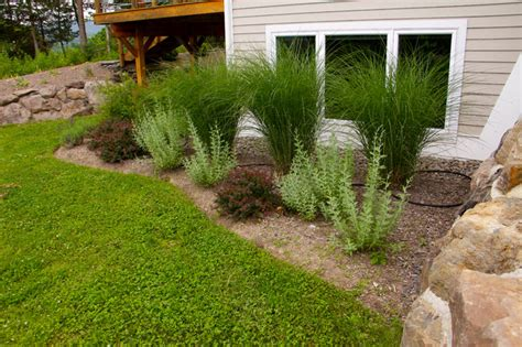 deer resistant gardens traditional landscape new