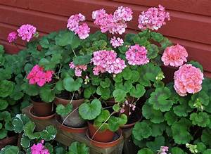 Tips For How To Make Annuals Blooms