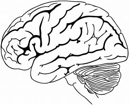 Brain Drawing Coloring Human Svg Pages Clipart