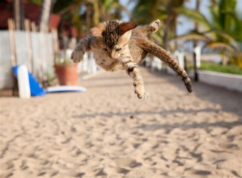 agile cat cats imgur