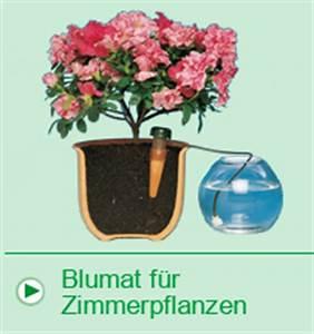 Bewässerungssystem Für Zimmerpflanzen : blumat automatisches bew sserungssystem f r pflanzen ~ Markanthonyermac.com Haus und Dekorationen
