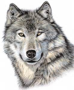 Wolf Shower Curtain Photo