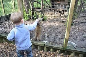 Was Fressen Waschbären : tiere f ttern und kinderspa am limfjord model und mama ~ Frokenaadalensverden.com Haus und Dekorationen