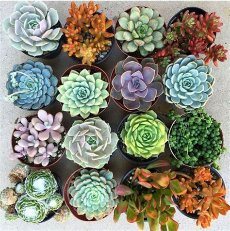 how to care for potted succulents succulent house plant care domino