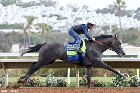 arrogate racehorse horse mar del rankings longines thoroughbred racing remains latest bloodhorse august